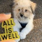 ALL IS WELL – Mental Health Awareness Month